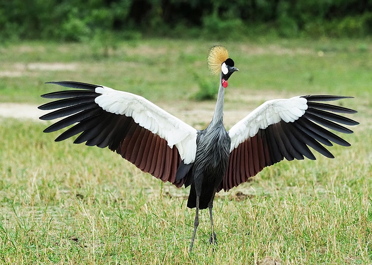 Birds of Murchison Falls, Where to Watch Birds