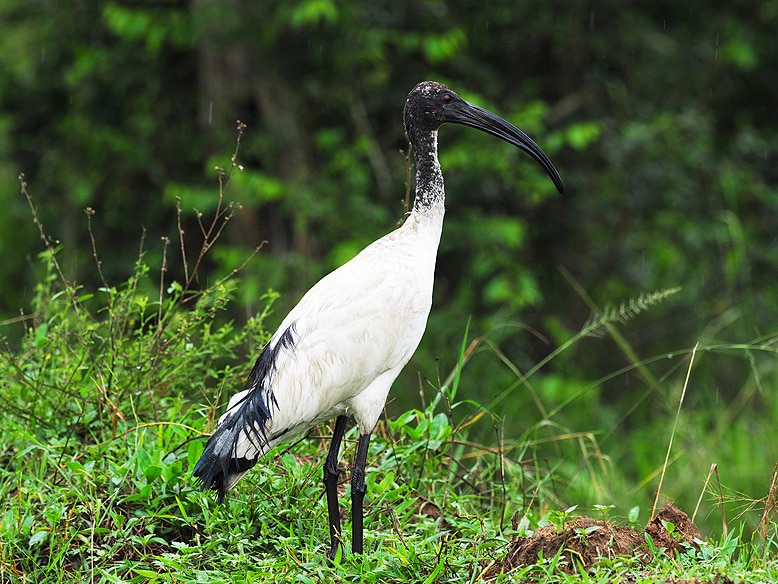 Birding Tour Kenya and Uganda Safari, Bird Watching for Game and Birds