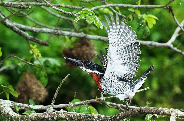 Birding In Kenya | Uganda Where When to watch birds Biridng Tour