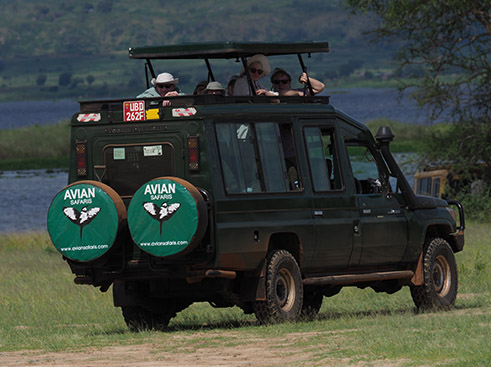 Uganda Birding Tours Uganda Birding Tours with Avian Safaris